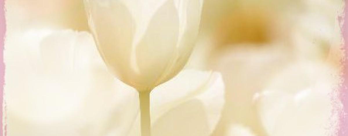 Significado de las flores El tulipan